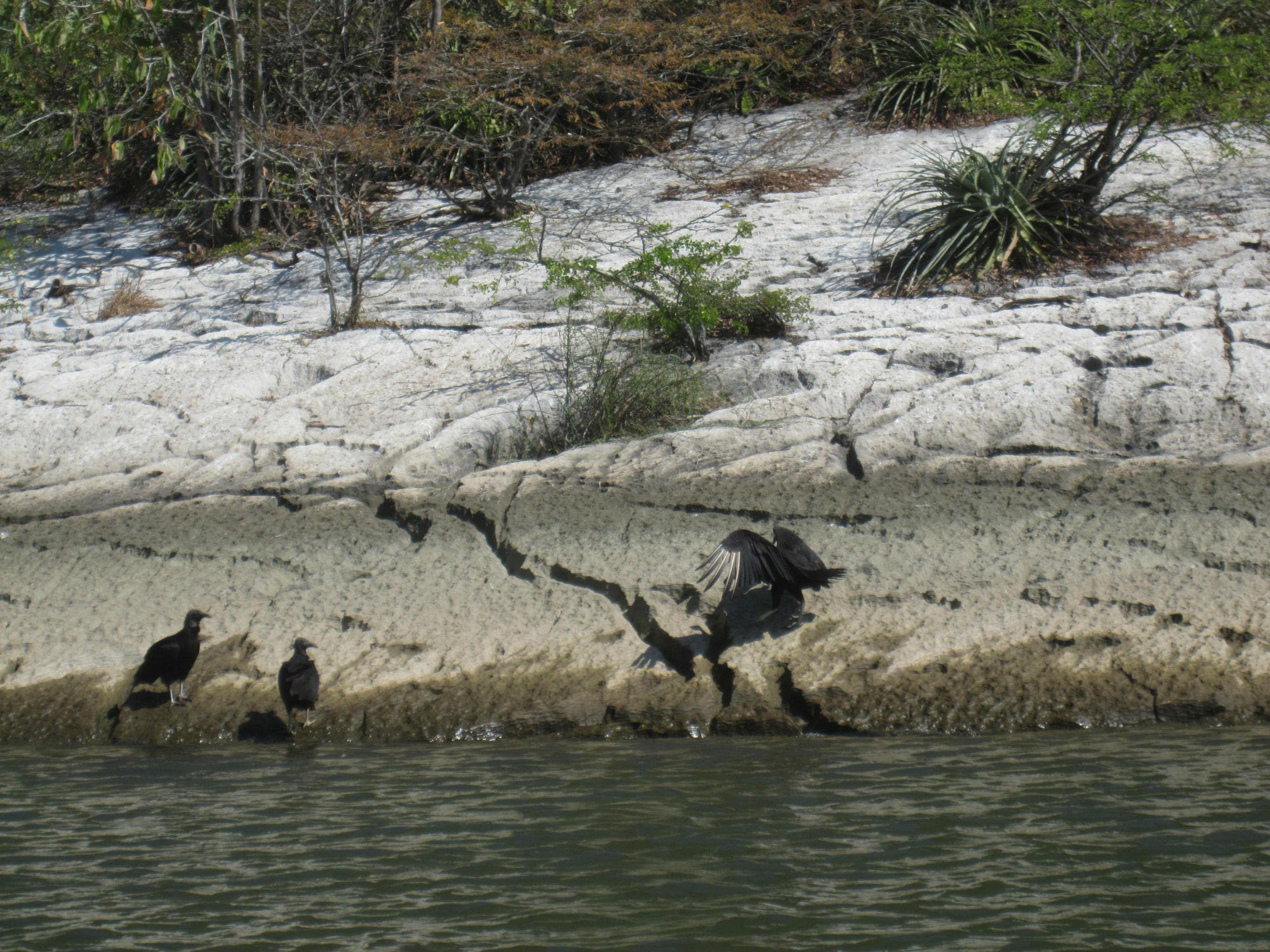 Vi såg väldigt många olika sorters fåglar i kanjonen, men de var rätt svårt att få bra bilder på dem! We saw a lot of different kinds of birds in the canyon, but there were quite difficult to take good pictures of them!