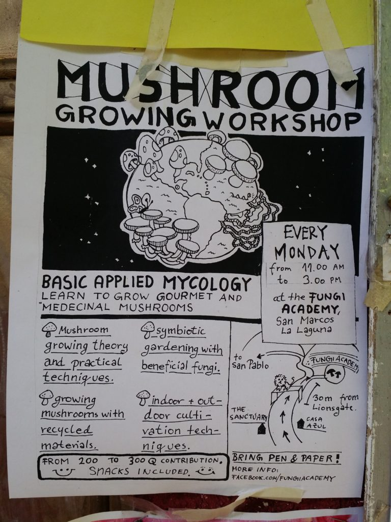 Man kan också lära sig att odla svampar här! You can also learn how to grow mushrooms here!