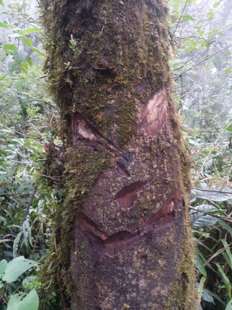 Ett ansikte! A face!