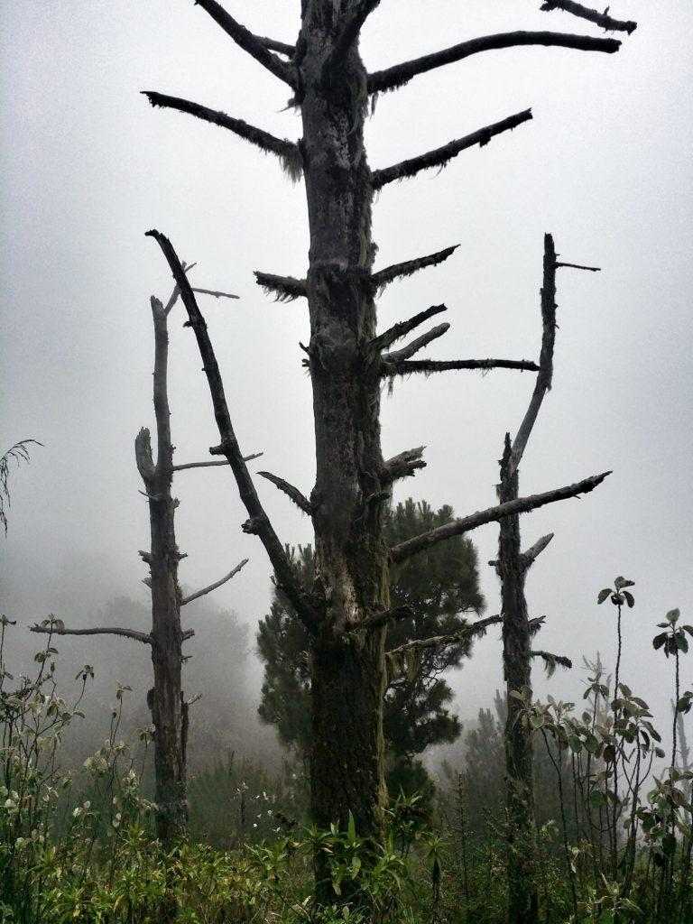 Dimman kröp allt närmare och förvandlade vulkanen till en trollskog! The fog crept closer and turned the volcano in to a magic forest!