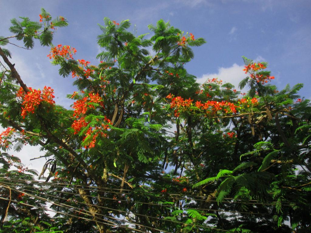 Blommande träd. Flowering trees.